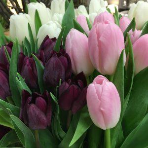 Beispielfotos von Straussen | aktuelle Blumenauswahl